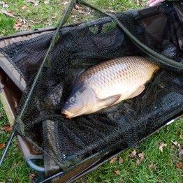 Dosazení ryb - podzim 2018