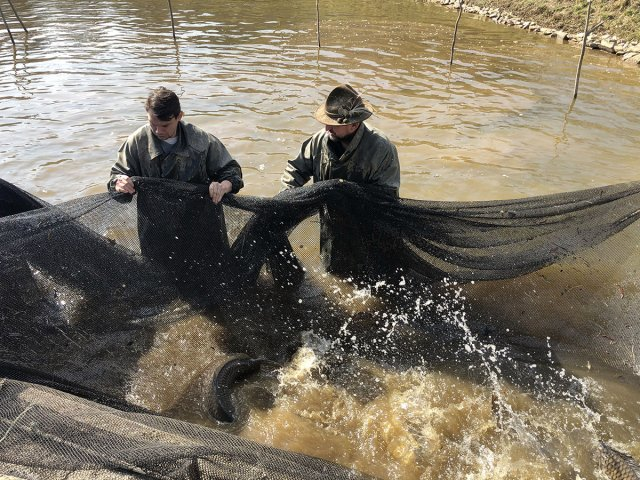 Dosazení ryb jaro 2020